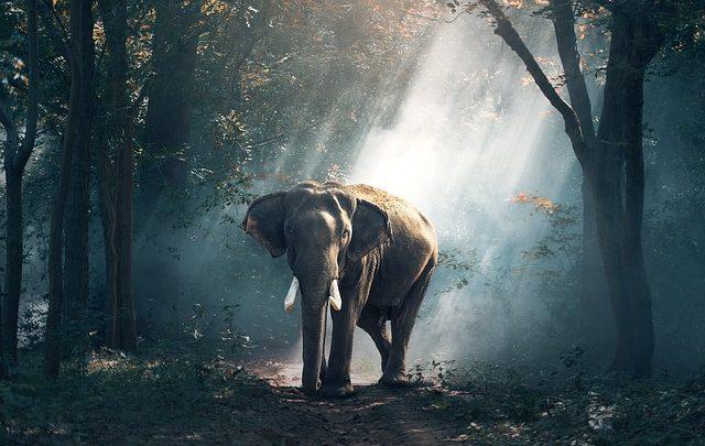 Elefanti d'America